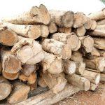 Cây gỗ Teak là loại thực vật ưa sáng, chịu lạnh kém, sinh trưởng phù hợp trong điều kiện khí hậu nhiệt đới gió mùa. Cây còn có khả năng chịu được lửa cháy rừng và hiếm khi sâu bệnh.  Lá cây gỗ tếch rụng vào mùa khô.Tháng 5 – 6, 7 – 8 hàng năm là mùa cây ra hoa kết trái.  Đây là những đặc điểm sinh học cơ bản của gỗ Teak. Bên cạnh đó, chúng ta còn có thể điểm đến một số đặc điểm tính năng khác của dòng gỗ này. Cụ thể như:  + Thuộc nhóm gỗ quý có giá trị kinh tế cao, kết cấu tốt, vân đẹp, thớ gỗ to nhưng không mịn.  + Không cong vênh, nứt nẻ.  + Thành phần gỗ có nhiều tinh dầu nên chống được mối mọt tấn công, chống được nấm mốc phá hoại  + Màu sắc: màu vàng sẫm hoặc vàng ngả nâu khá sang trọng phù hợp cho đồ nội thất phong cách cổ điển lẫn hiện đại.  + Rất dẻo dai, có thể uốn cong dễ dàng, khả năng chịu lực tốt.  + Bề mặt gỗ dễ vệ sinh  + Bản chất tự nhiên của gỗ Teak là khả năng chống chịu được thời tiết khắc nghiệt và biến động. Do đó, sản phẩm từ loại gỗ này rất bền, có thể thích nghi với điều kiện môi trường thường xuyên thay đổi.    <strong><em>Minh Hải cung cấpGỗ Teak có nguồn gốc trong nước và nhập khẩu hợp pháp đáp ứng mọi quy cách yêu cầu của khách hàng, sẵn sàng nhận cưa xẻ theo quy cách hoặc gia công theo bản vẽ từ đơn giản đến phức tạp nhất.</em></strong>